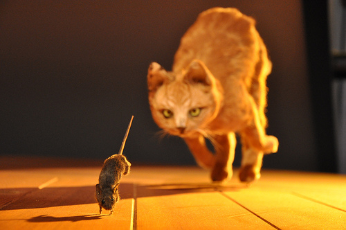 cat-and-mouse-chase