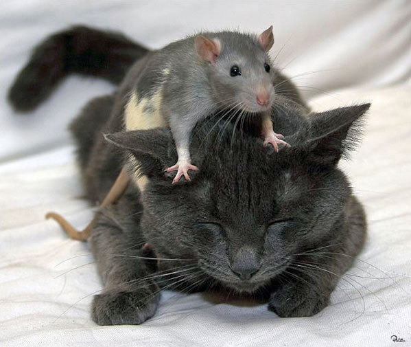 cat-&-mouse-4